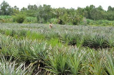 Chính phủ đánh giá cao Ngân hàng Liên Việt vì đóng góp cho khu vực nông nghiệp -…